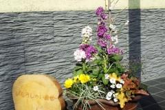 お花も実も楽しめる「南紅梅」を主木にし、ヒューケラやハクリュウで、和の味を出しました。 �2749-3.jpg 大きい鉢には 黄色いサンシュウと紫のアネモネ、小さい鉢には 黄色いヒメコスモスと紫のスカピオサの寄せ植えです。