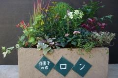 タイルと漆喰を使った、手作りコンテナです。中央にコキアを入れ、紅葉が楽しみな寄せ植えです。