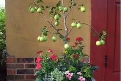 植栽に洋菓子店にあうような、実のついたクラブアップルをつかいました。主木が目をひくようで、お客様に好評のようです。