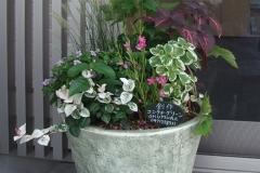 シンプルな鉢の秋らしい植栽にしてみました。めずらしいベニセツムは、風が吹くと寄せ植えの印象も引き立ててくれます。