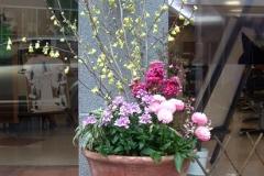 黄色い花のヒュウガミズキが、ガラスの扉の前で映えています。新しい看板のとなりに、置かせて頂き印象が変わりました。